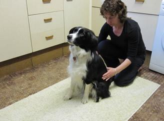 Dog physio treatments
