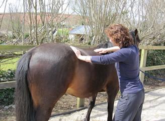 horse treatment